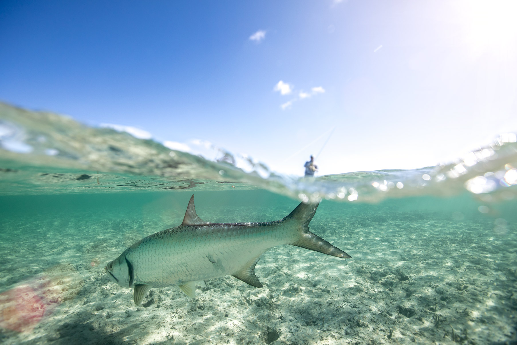 tourism - tarpon in bahamas